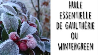 HE wintergreen gaulthérie