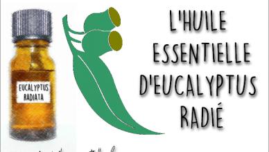 Fiche eucalyptus radié