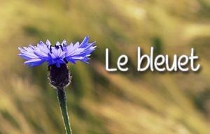 eau florale bleuet