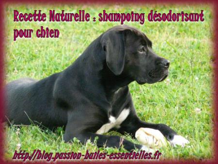 recette de shampoing d sodorisant et anti puces pour chien. Black Bedroom Furniture Sets. Home Design Ideas
