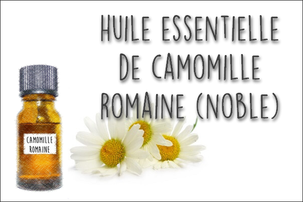 huile essentielle camomille noble ou romaine