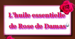 Infographie-rose-de-damas