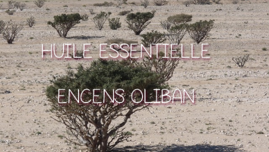 huile essentielle d'encens oliban
