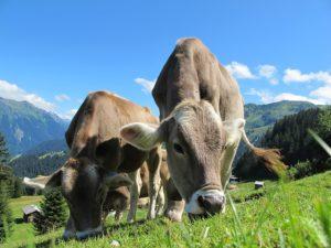 huiles essentielles élevage animaux