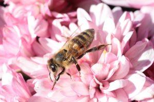 aromathérapie ruches abeilles
