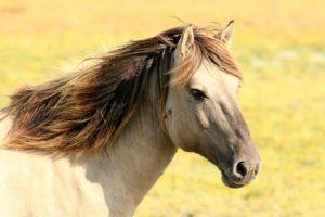 aromathérapie élevage cheval