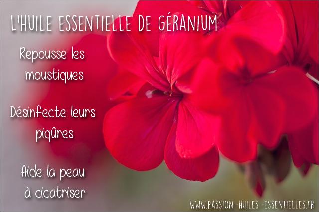 Huiles essentielles pour soulager une piq re de moustique - Piqure aoutat et huile essentielle ...